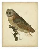 Antique Nozeman Owl IV Giclee Print by  Nozeman