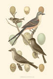 British Birds and Eggs I Prints by Vision Studio