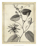 Passiflora VI Posters by Charles Francois Sellier