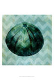 Chevron Shell IV Print by  Vision Studio