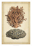 Coral Companion III Prints