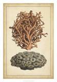 Coral Companion III Giclee Print by  Vision Studio