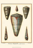 Redoute Shells II Posters by Pierre-Joseph Redout&#233;
