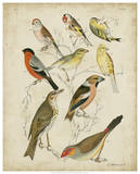 Non-Embellished Avian Gathering II Prints by G. Lubbert