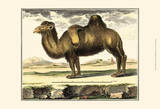 Diderot Camel Prints by Denis Diderot