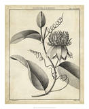 Passiflora V Giclee Print by Charles Francois Sellier