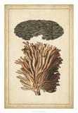 Coral Companion I Prints