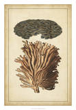 Coral Companion I Giclee Print by  Vision Studio