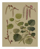 Forest Foliage IV Giclee Print by  Hempel