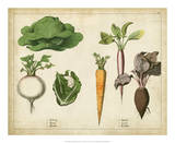 Kitchen Vegetables & Roots I Prints