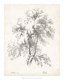 Birch Tree Study Giclee Print