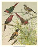 Birdwatcher's Delight III Giclee Print by  Cassell