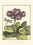 Garden Vignette IV Posters by Johann DeBry