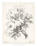 Oak Tree Study Prints