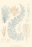 Delicate Coral II Posters by F. Reeve