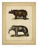 Studies in Natural History III Giclee Print