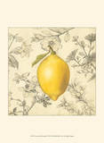 Lemon and Botanicals Poster by Megan Meagher