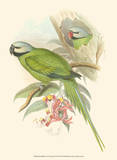 Small Birds of Tropics II Posters by John Gould
