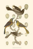 British Birds and Eggs II Affiche par  Vision Studio