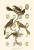 British Birds and Eggs II Kunstdruck von  Vision Studio