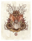 Baroque Nautilus II Posters by Naomi McCavitt