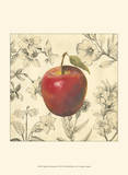 Apple and Botanicals Posters by Megan Meagher