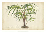 Palm of the Tropics VI Giclee Print by  Van Houtteano