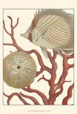 Coastal Collection II Posters par  Vision Studio