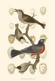 British Birds and Eggs III Affiches par  Vision Studio
