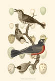 British Birds and Eggs III Prints by  Vision Studio