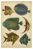 Non-Emb. Goldsmith's Spinous Fishes Prints by  Goldsmith