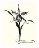 Studies in Ink - Cattleya Art by Nan Rae