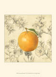 Orange and Botanicals Print by Megan Meagher