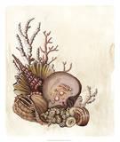 Baroque Nautilus III Giclee Print by Naomi McCavitt