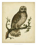 Antique Nozeman Owl II Giclee Print by  Nozeman