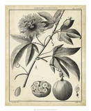 Passiflora I Poster by Charles Francois Sellier