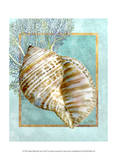 Turban Shell and Coral Art by Lori Schory