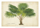Palm of the Tropics V Posters by Van Houtteano 