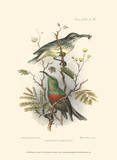 Birds in Nature I Posters by J.C. Keulemans