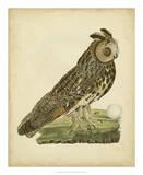 Antique Nozeman Owl III Giclee Print by  Nozeman