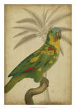 Parrot and Palm II Poster