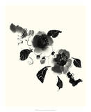 Studies in Ink - Camellia Affiches par Nan Rae