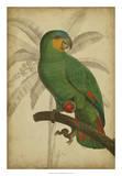 Parrot and Palm I Reproduction procédé giclée par  Vision Studio