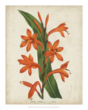 Tropical Array VIII Print by Van Houtteano 