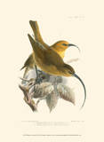 Birds in Nature II Prints by J.C. Keulemans
