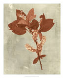 Impressions in Terra Cotta Giclee Print