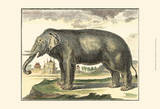 Diderot Elephant Print by Denis Diderot