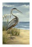 Shore Bird I Affiche par Ethan Harper