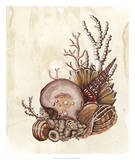 Baroque Nautilus I Posters by Naomi McCavitt