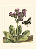 Garden Vignette II Posters by Johann DeBry